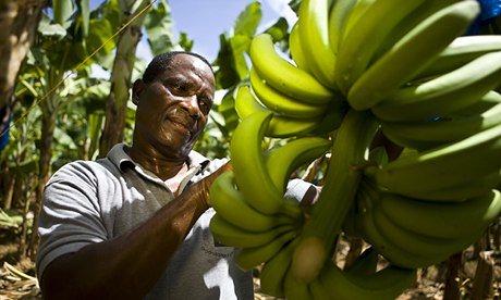 st lucia banana farmer